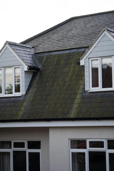 Green algae on a slate roof