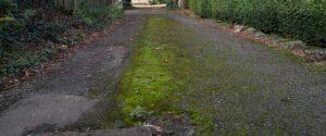 Moss on a tarmac driveway